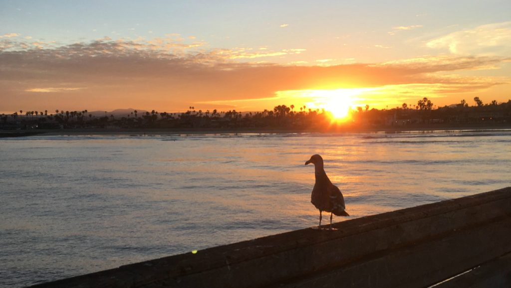 ocean beach free photo sunrise with seagull