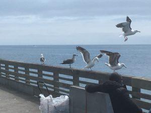 Seagulls at Ocean Beach Pier